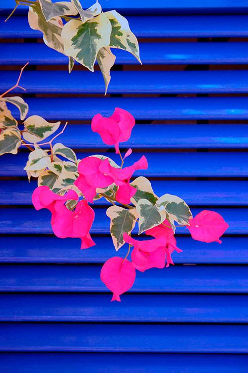 Galería de fotos de venderfotos.net